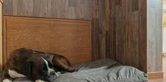 Hund der auf einem großen Kissen liegt und schläft.