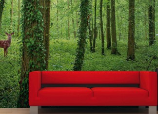 Fototapete Motiv: Wald
