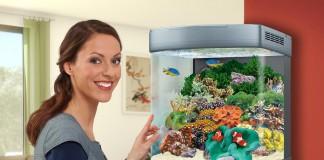 Mit der richtigen Beleuchtung können Aquarianer für artgerechte und natürliche Lichtverhältnisse sorgen.