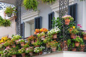 Balkonpflanzen brauchen gute Pflege u.a. mit Dünger. Foto: Wuxal