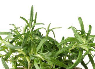 Was könnte besser zu Rosmarin oder einem Kaktus passen als ein leuchtender Pflanzentopf? Foto: Le Creuset
