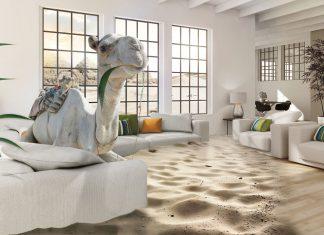 Wüstenklima zeichnet sich durch eine geringe Luftfeuchtigkeit aus. Für uns Menschen ist das in Wohnräumen auf Dauer ungesund. Foto: humilife.de