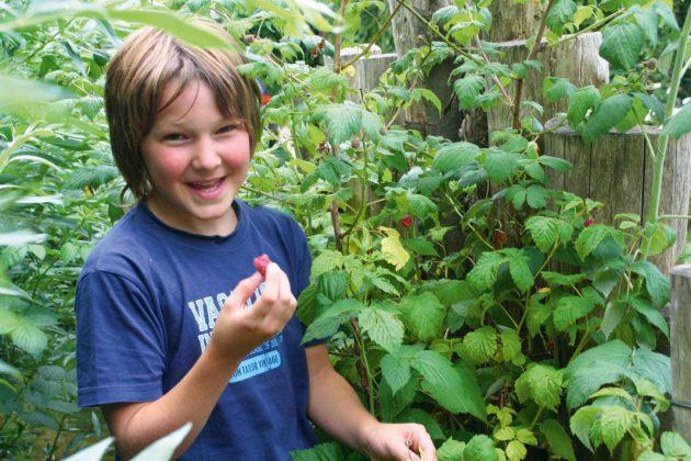 Selbstgeerntete Früchte aus dem eigenen Garten sind die besten