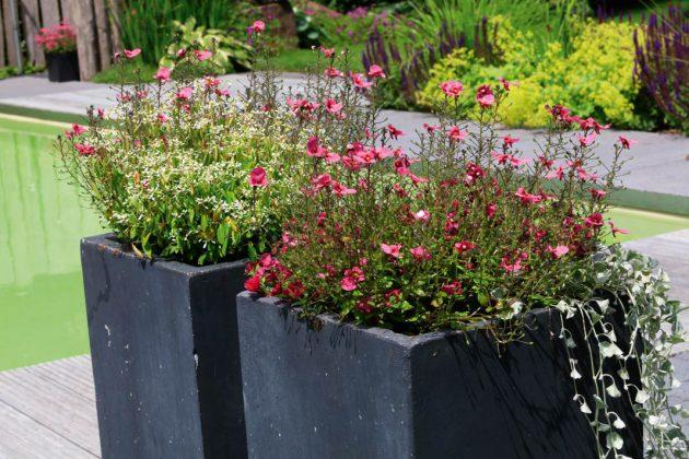 Verschiedene Pflanzen im Erwachsenengarten