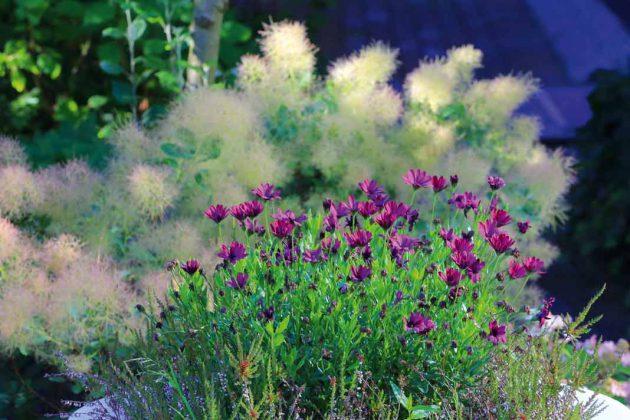 Der Gartenfachmann kennt die einzelnen Pflanzenarten und ihre Bedürfnisse.