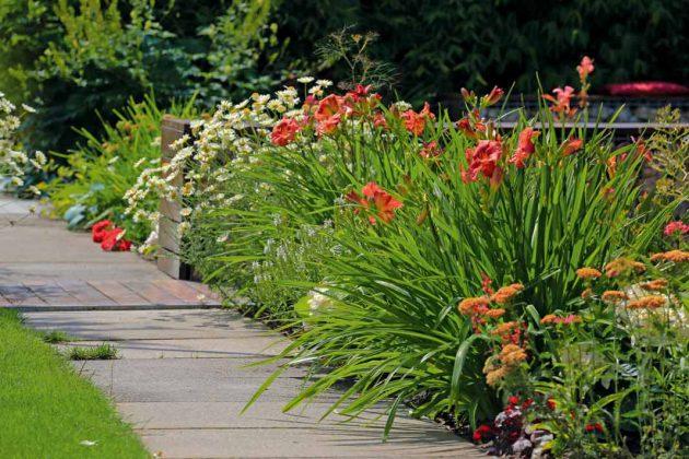 Mehrjährige Pflanzen vor einjährigen und immergrüne vor laubabwerfenden.