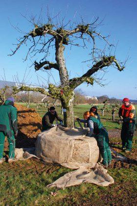 Außer den großen Maschinen ist auch noch ein ganzes Team an Arbeitern für einen Tag mit der Umpflanzung beschäftigt.