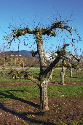 Baum-Umzug