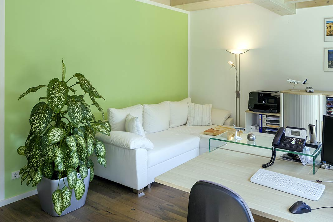 Frisches Grün an einer Wand im Wohnzimmer.