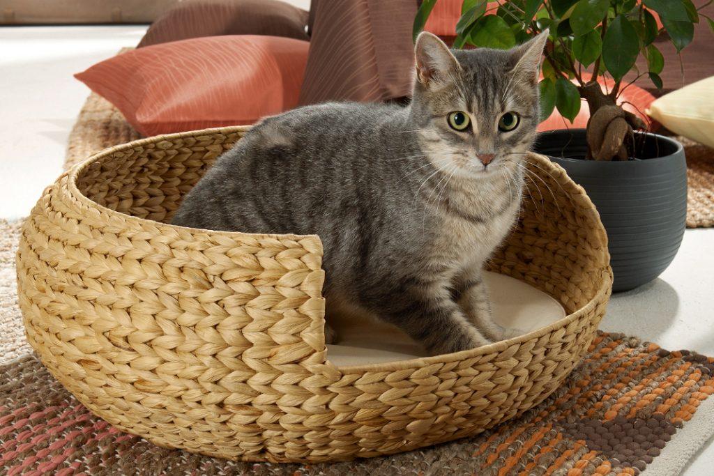 Die Katze fühlt sich sichtlich Wohl in Ihrem Körbchen