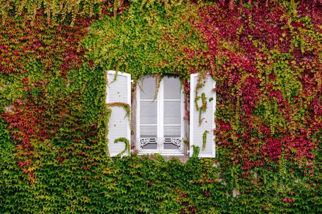Fassadenbegrünung mit Wein