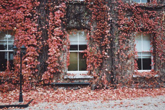 Fassade begrünt mit Wein