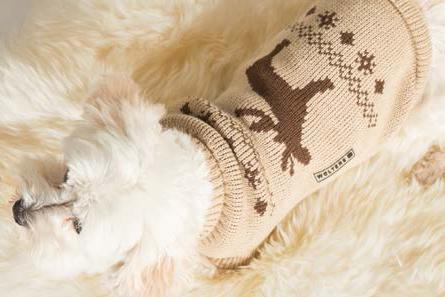 Winterpulli für Hunde