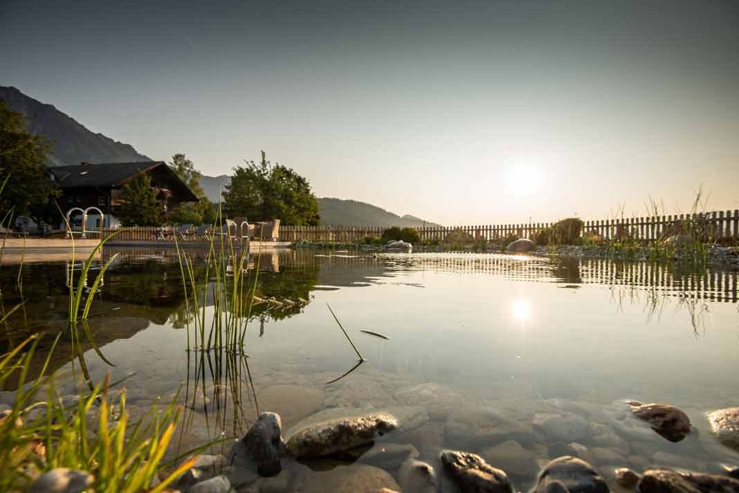 Schwimmteich im eigenen Garten