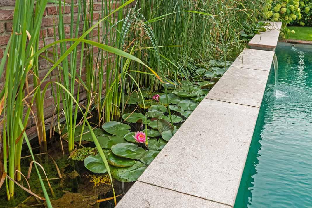 Schwimmteich und regenerationszone