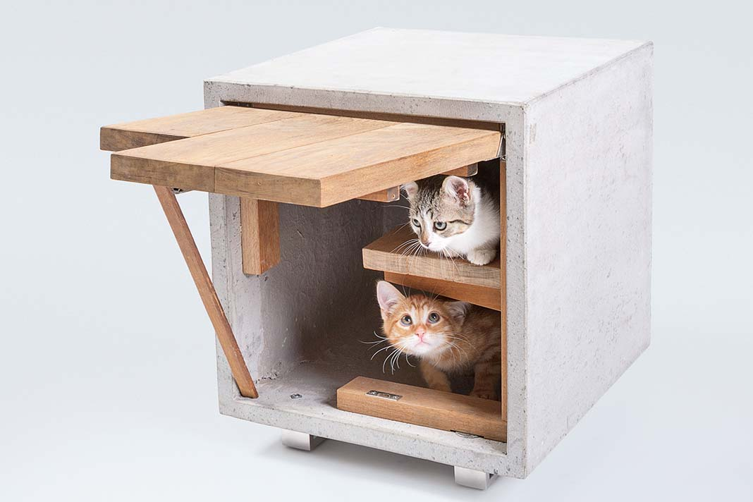 Haustiere Katze