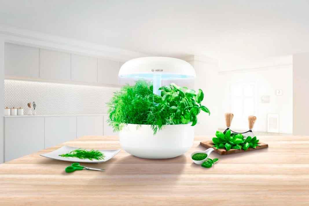 Hydrokultur in der Küche