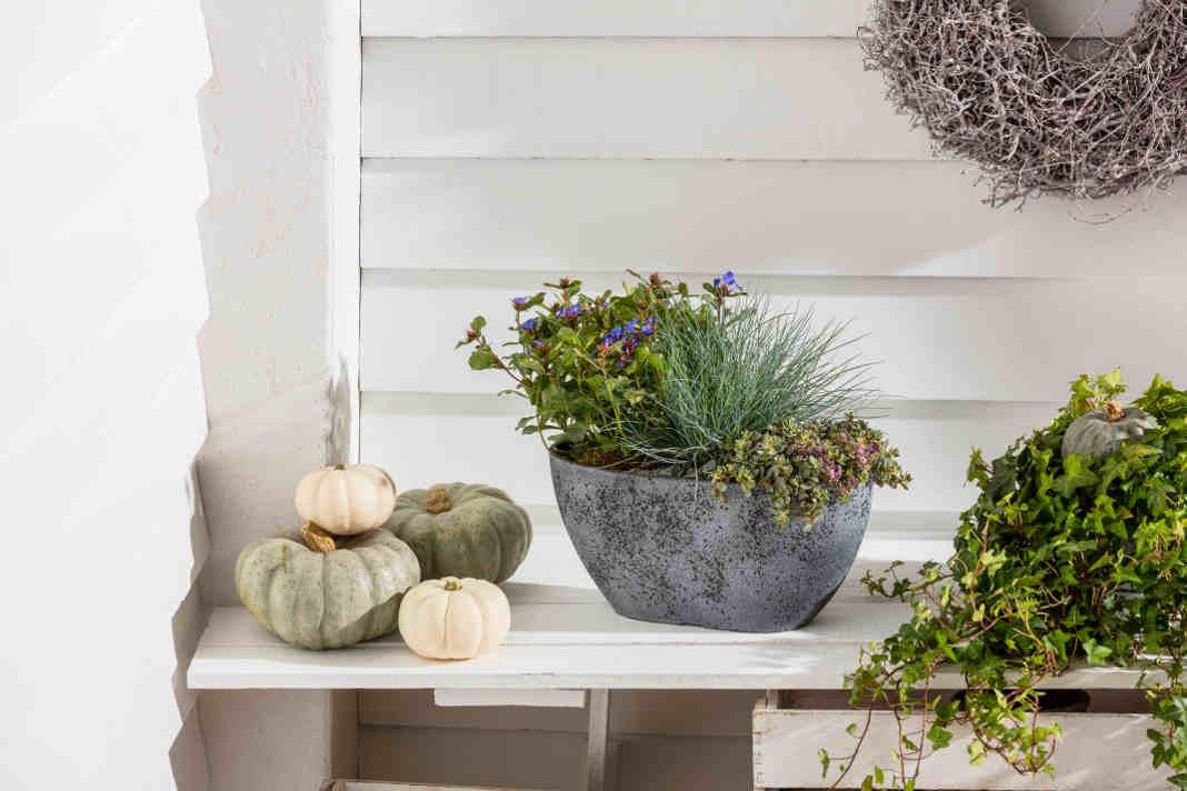 Naturmaterialien, wie Zierkuerbisse als moderne Wohnaccessoires - Dehner Gartencenter GmbH & Co. KG