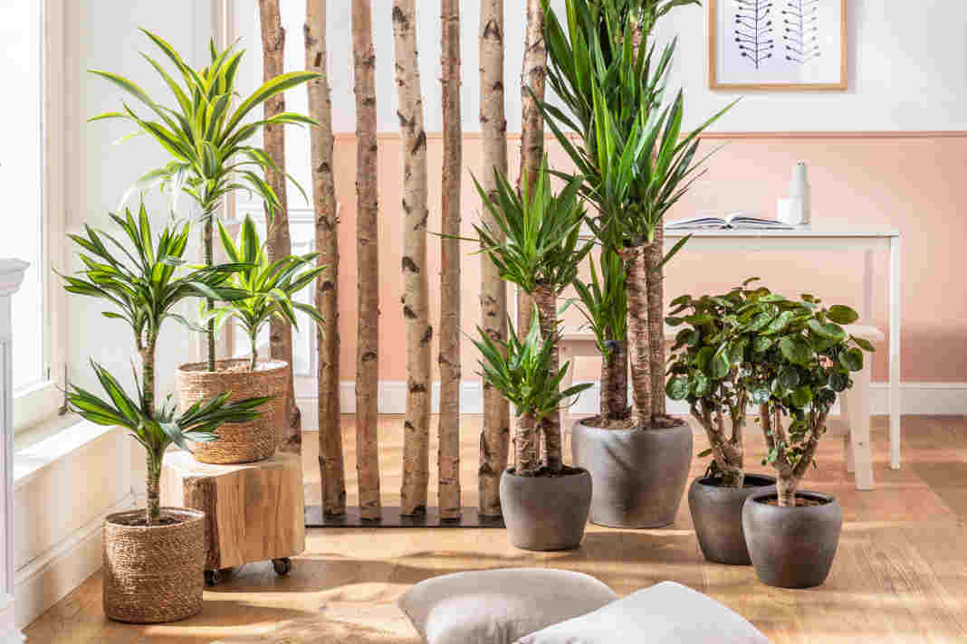 Sommerliche moderne Wohnaccessoires - Blumentoepfe - Dehner Gartencenter GmbH & Co. KG