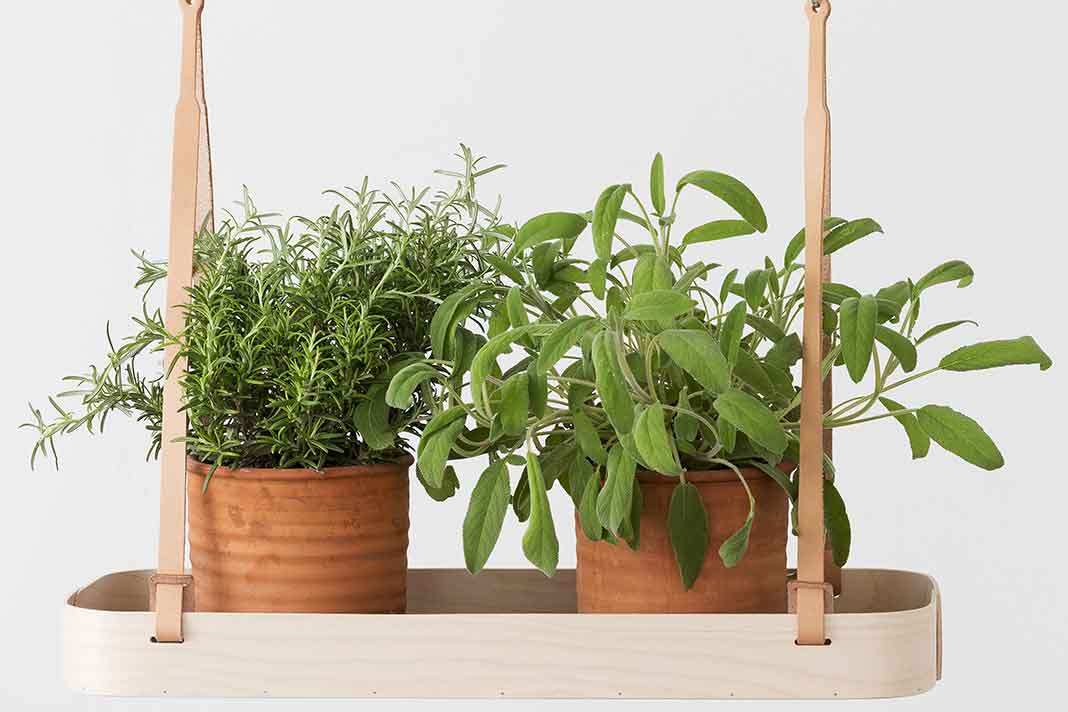 Pflanzenhalterung aus Birke