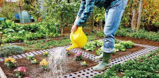 Gemüsebeet wird mit Regenwasser aus Gießkanne bewässert